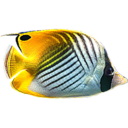 3D Fish School Screen Saver icon