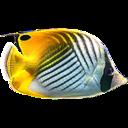 3D Fish School Screen Saver icon
