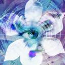 Blue Iris icon
