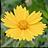 Neat Image Pro+ icon