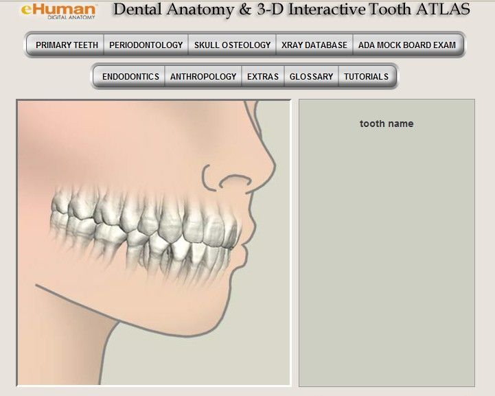 3d tooth atlas free download